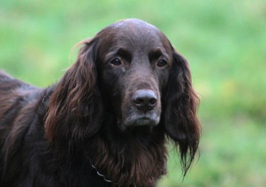 Собачий портрет 114108--38071742-m549x500-u8a2e6