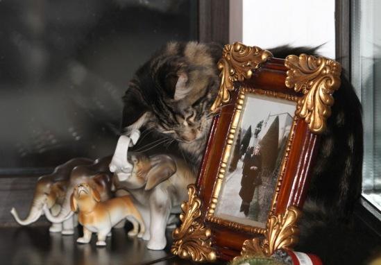 Про кошек 114108--39334541-m549x500-u04597
