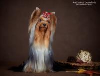 http://data13.gallery.ru/albums/gallery/120136-a98f0-59885965-200-ucc99b.jpg
