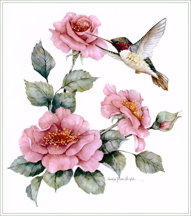для кухни эскизы красивых птиц с цветами менее, выбор того