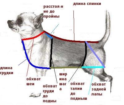 Одежда для собак своими руками. Комбинезон, выкройки с фото