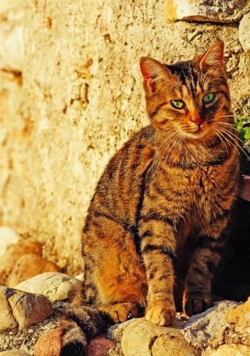 Кошки Сирмионе.