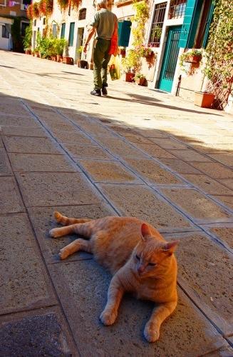 Венеция. Кошачий дож.