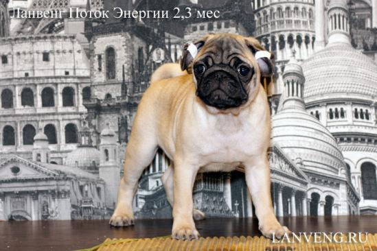 http://data13.gallery.ru/albums/gallery/211527--52201372-m549x500-udabf1.jpg