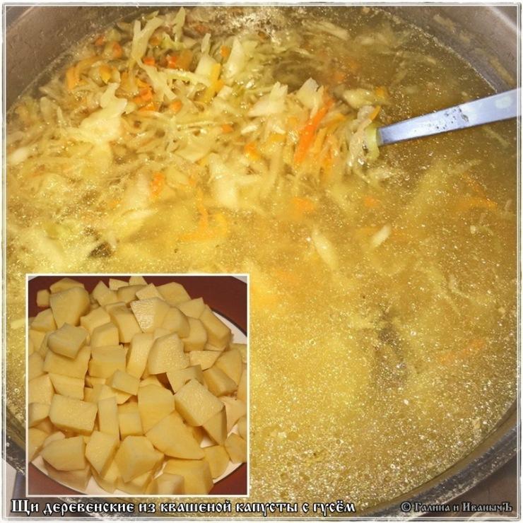 вкусные блюда из свежей капусты