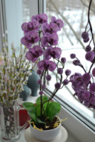 Таша92 Орхидея из бисера. .  Работы мастера и МКАвтор МК: Вербицкая Наталия.  Показываю какие материалы я брала для...