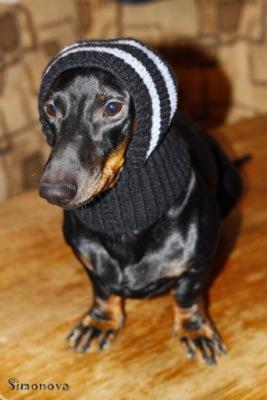 Капор для собаки связать