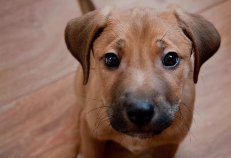 Энтерит у собак, Нижний Новгород, Animals NN